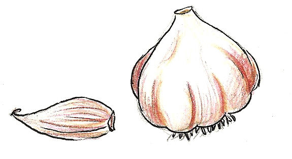 garlic bulb 1 - search