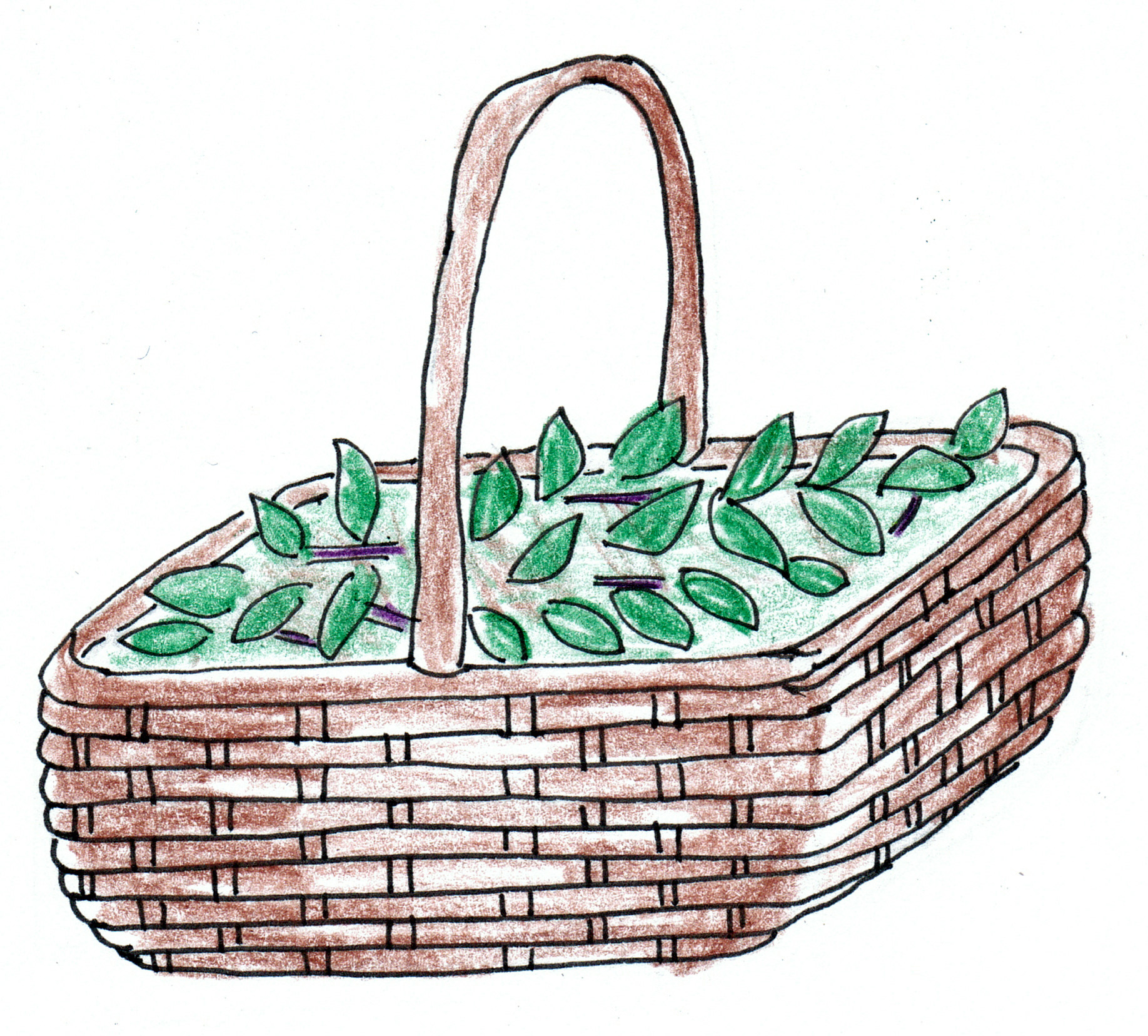 basket of mint
