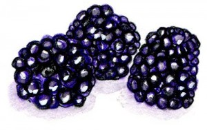 blackberry-berry2