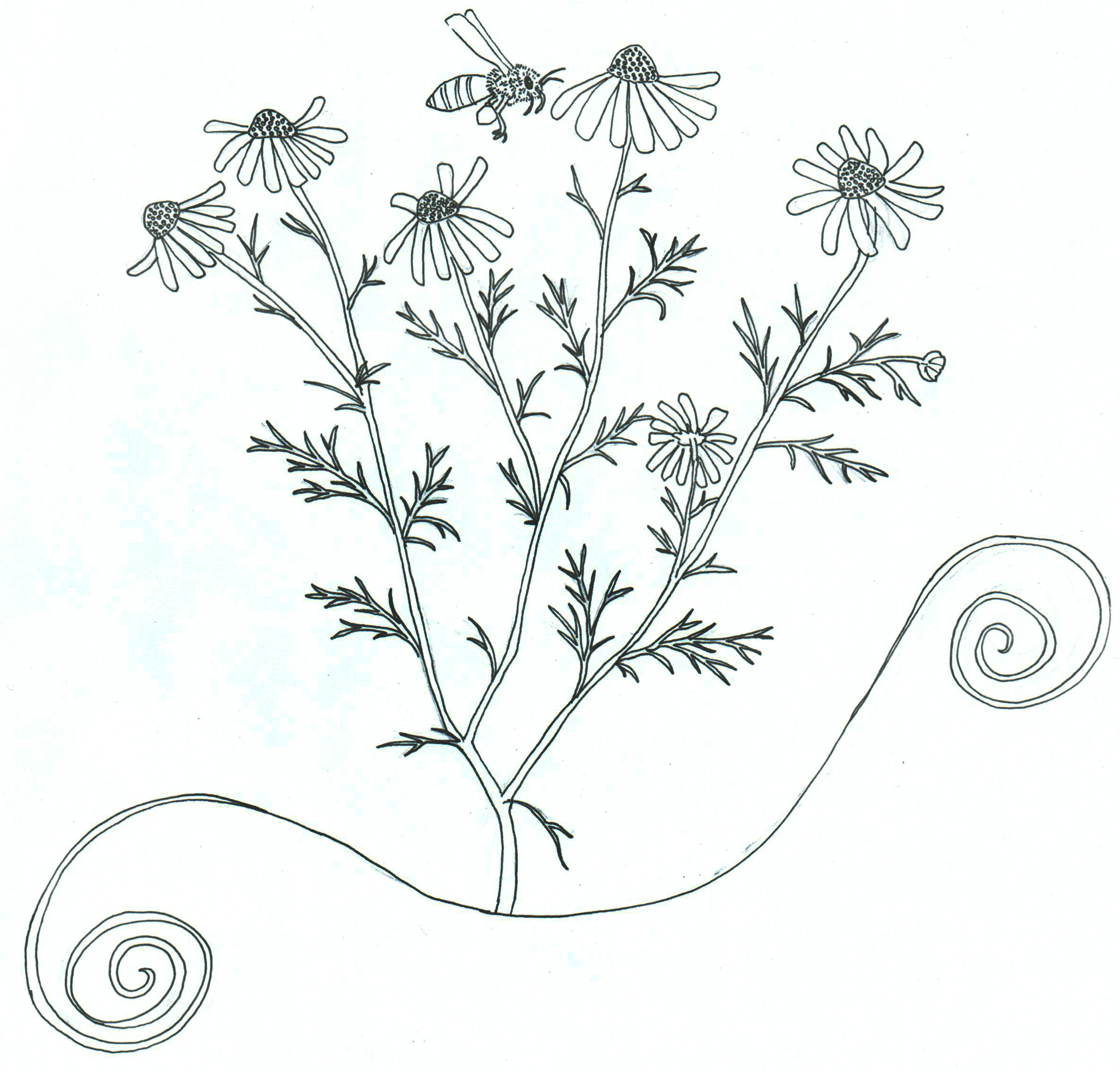 herbs coloring pages - photo#28