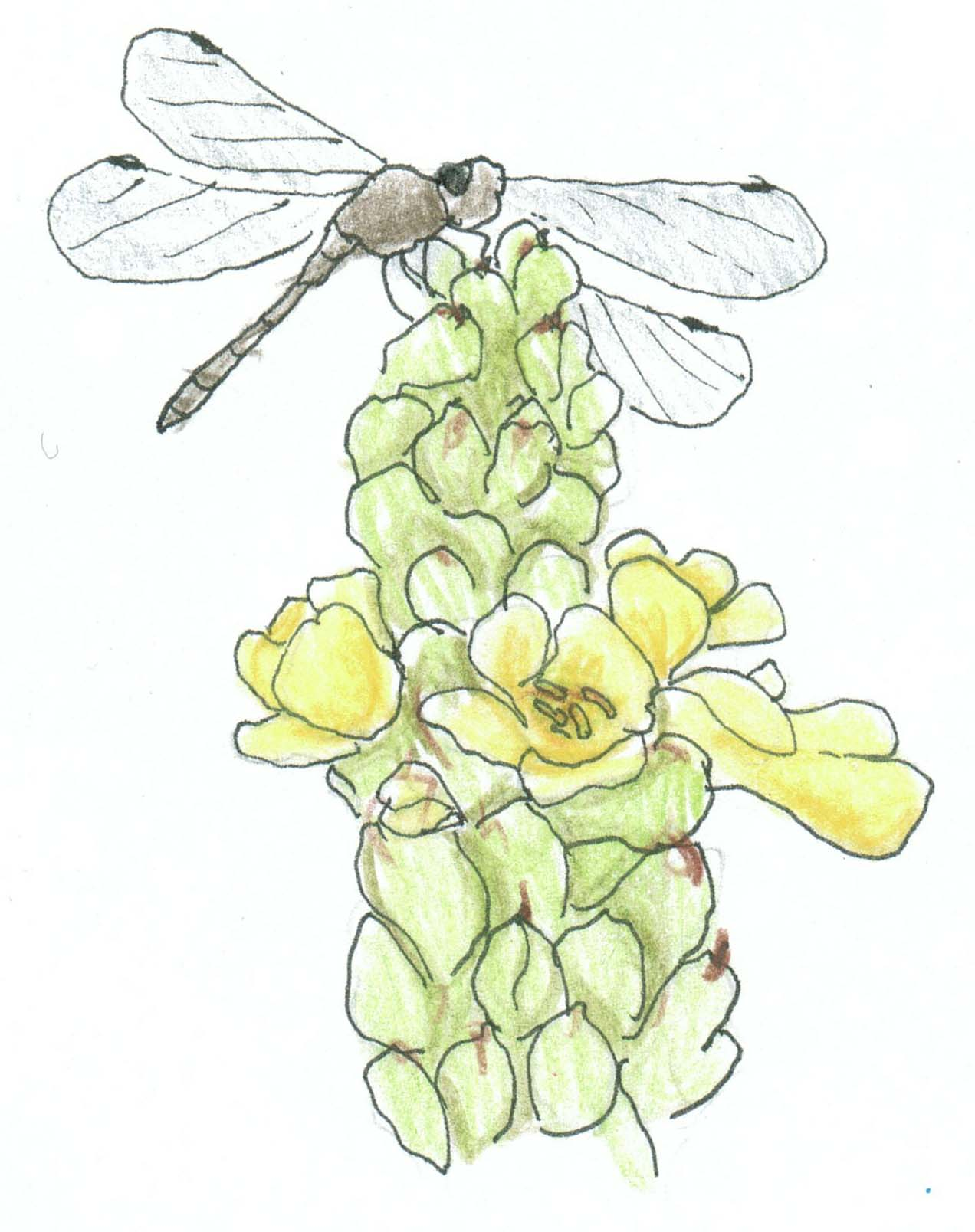 poem - dragonfly flower