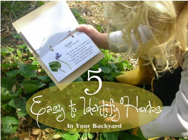 5-easy-to-id-herbs-in-your-backyard