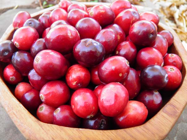 Cranberries at HerbalRootszine.com