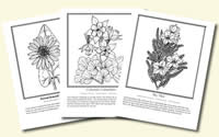 Download Our Printable Wildflower Coloring Pages | Texas Highways | 125x200
