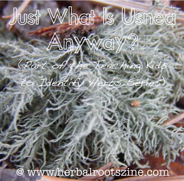 Just What is Usnea?