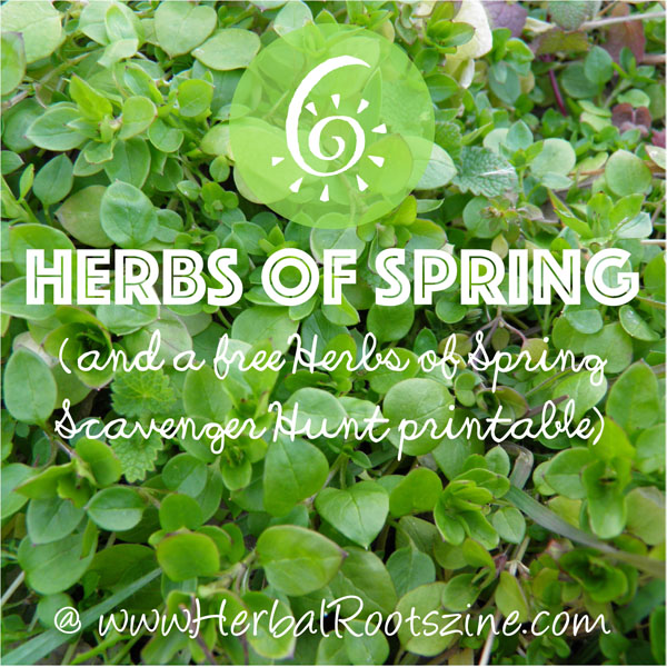Herbs-of-Spring