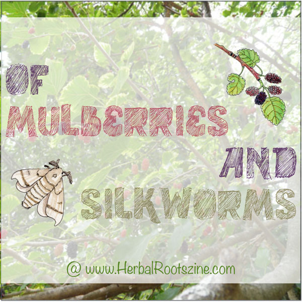 Of Mulberries and Silkworms