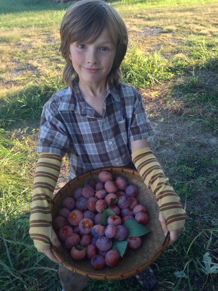 Harvesting wild Persimmons. This little monkey loves to climb in the trees to reach the juicy sweet ones high up.
