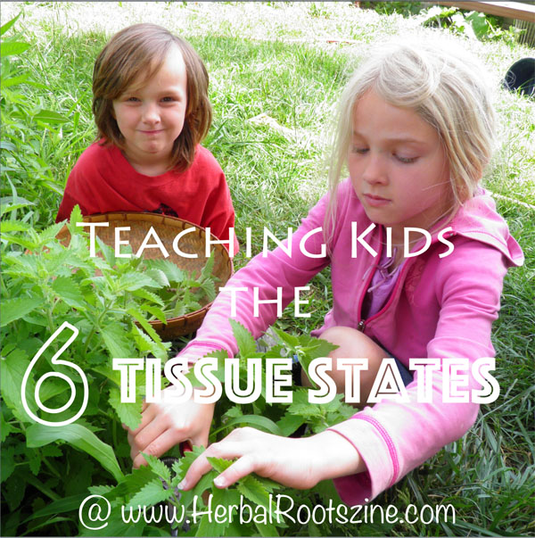 Teaching Kids the 6 Tissue States