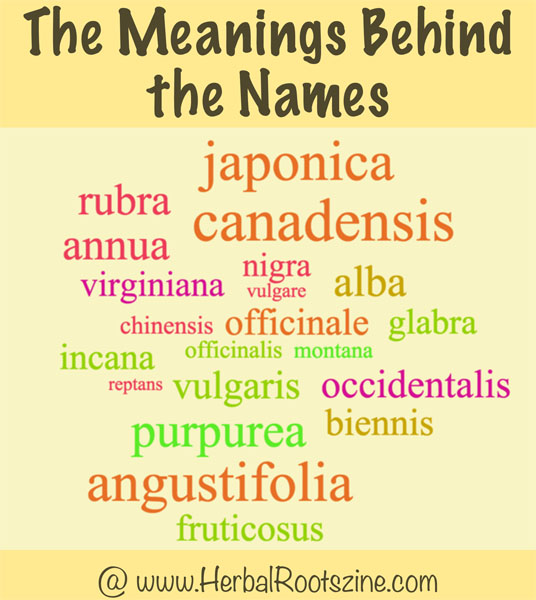 The-Meanings-Behind-The-Names