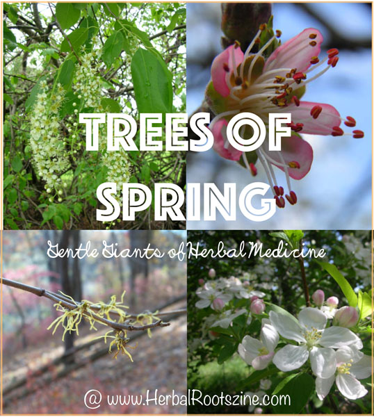 trees-of-spring