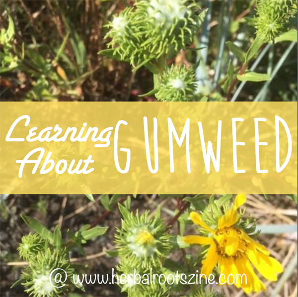 learning-about-gumweed