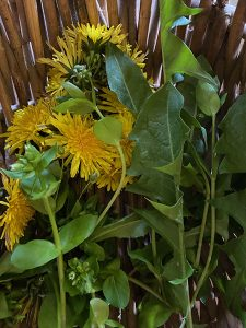 Dandelion flowers and leaves, and Chickweed in a basket
