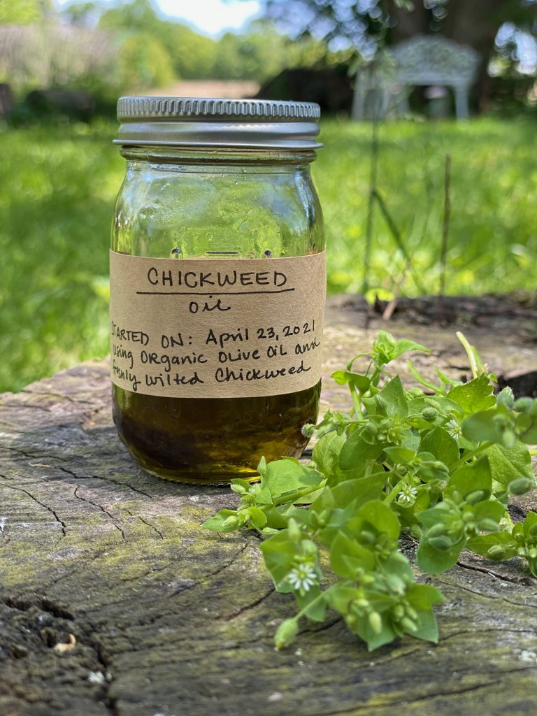 A small clear glass jar of infused oil with a brown kraft label and a silver lid sits on a wooden stump. Next to it is a bunch of fresh Chickweed.